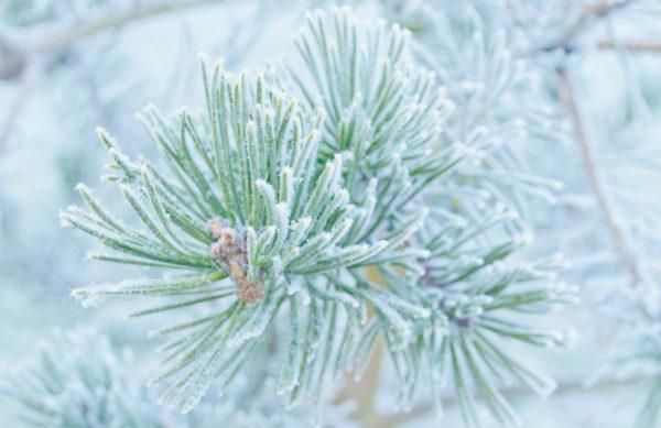Gartenkalender Dezember