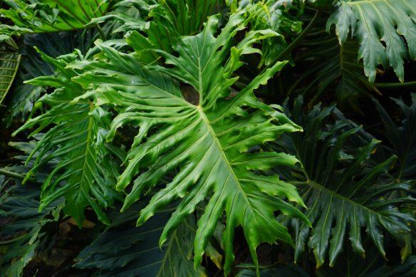 Grünpflanzen: Für ein schönes Zuhause