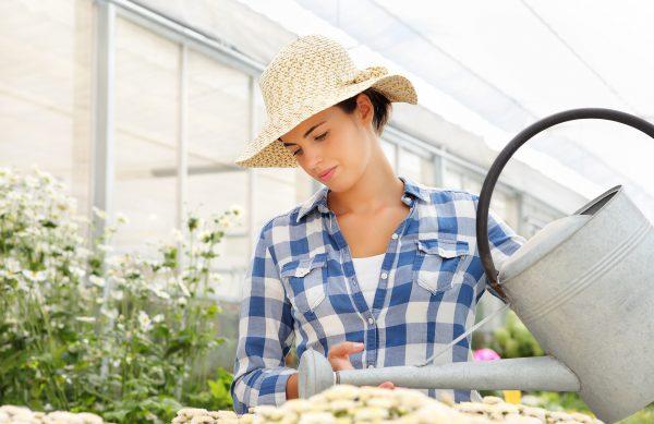 Überwinterungsservice im Gartenland Würstle